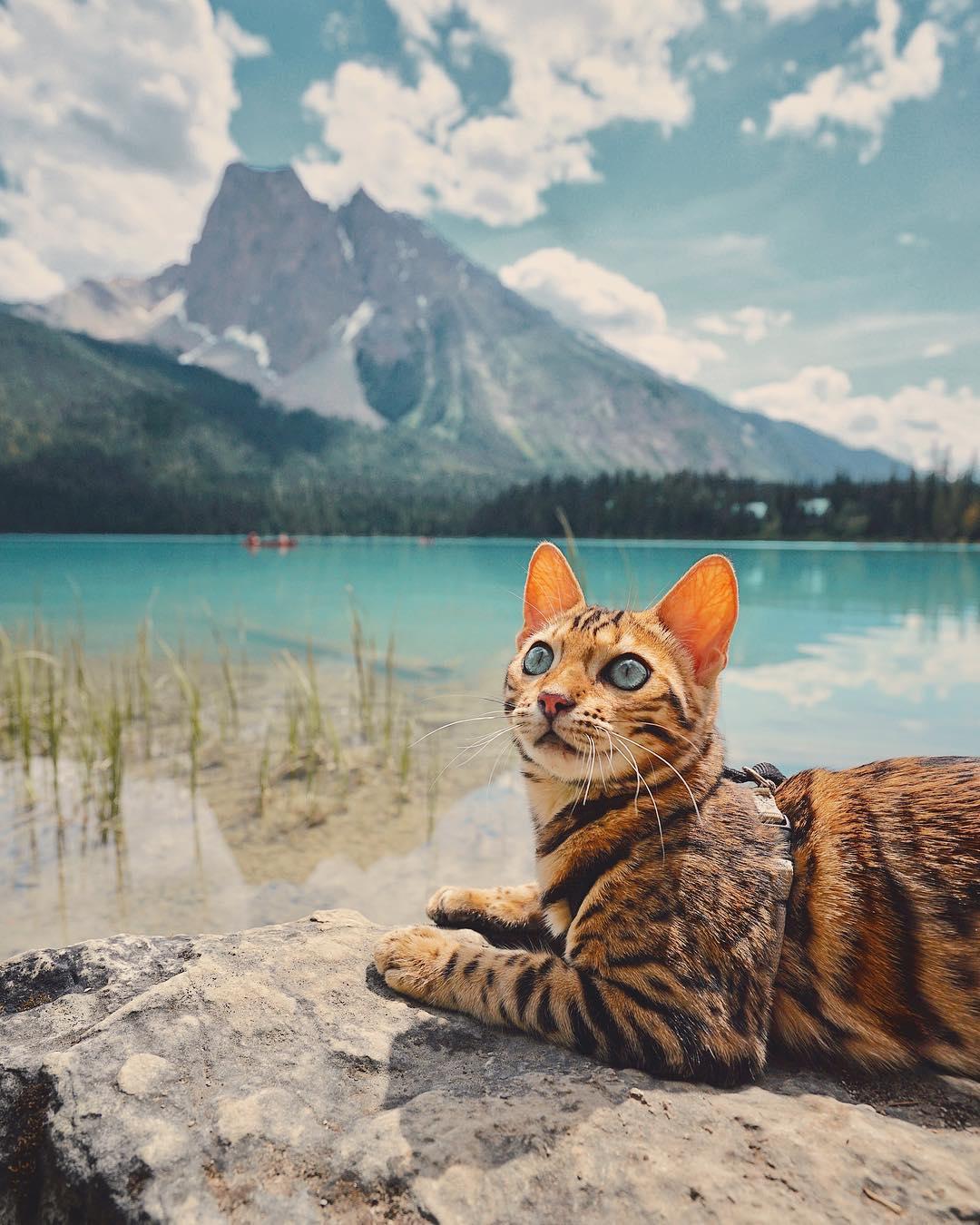 عکس گربه بنگال , مناظر زیبای کانادا