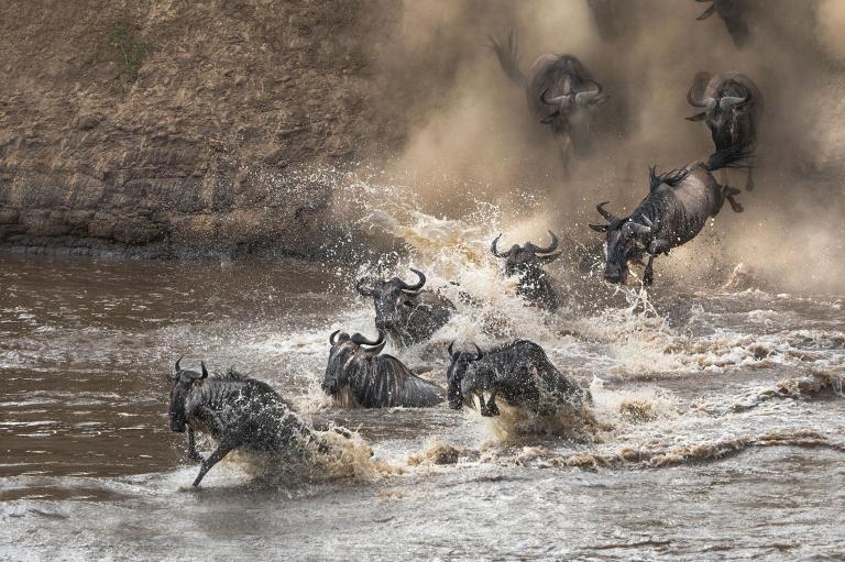عکس کل یالدار در طبیعت کنیا