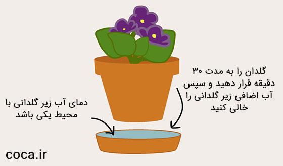 روش صحیح آبیاری گل بنفشه آفریقایی با زیر گلدانی