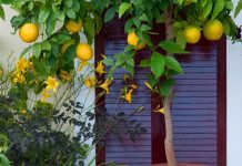 کاشت هسته درخت نارنج و پرتقال در گلدان