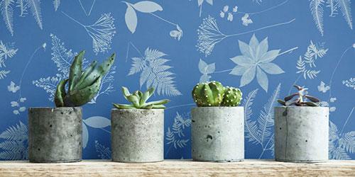 گل و گیاه زینتی خانگی