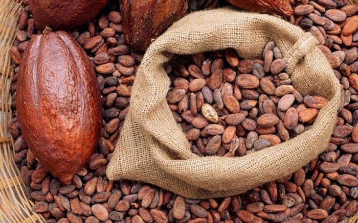 خواص کاکائو , عکس دانه های کاکائو