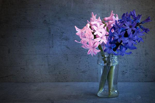 عکس پروفایل گل سنبل آبی و صورتی