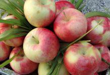 خواص سیب گلاب