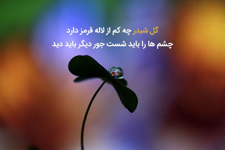 گزیده شعر زیبای سهراب سپهری درباره زندگی
