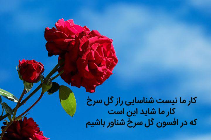 عکس نوشته شعر کار ما نیست شناسایی راز گل سرخ از سهراب سپهری