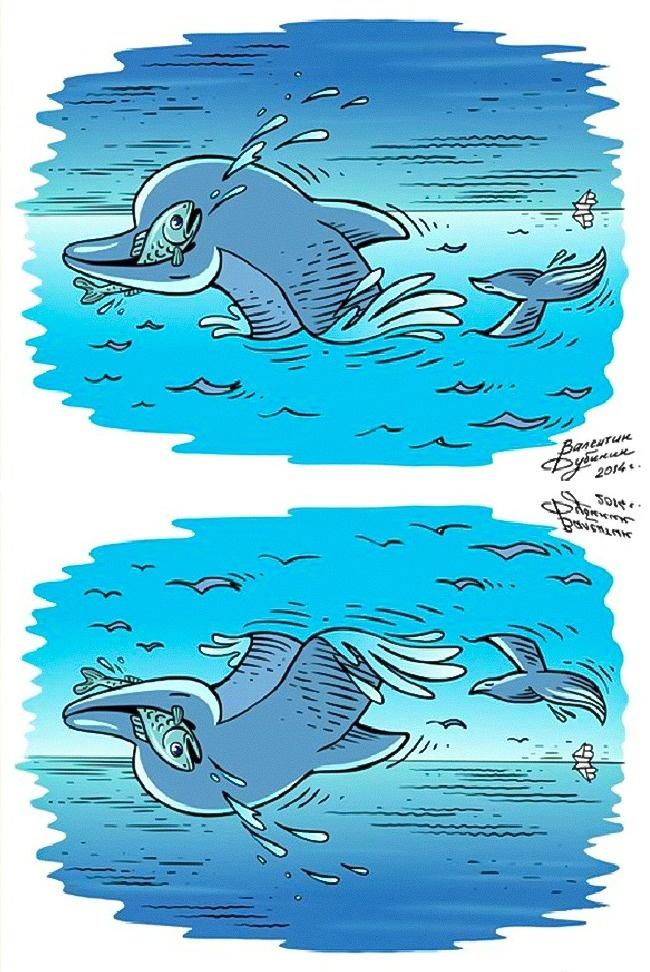 دلفین و پلیکان