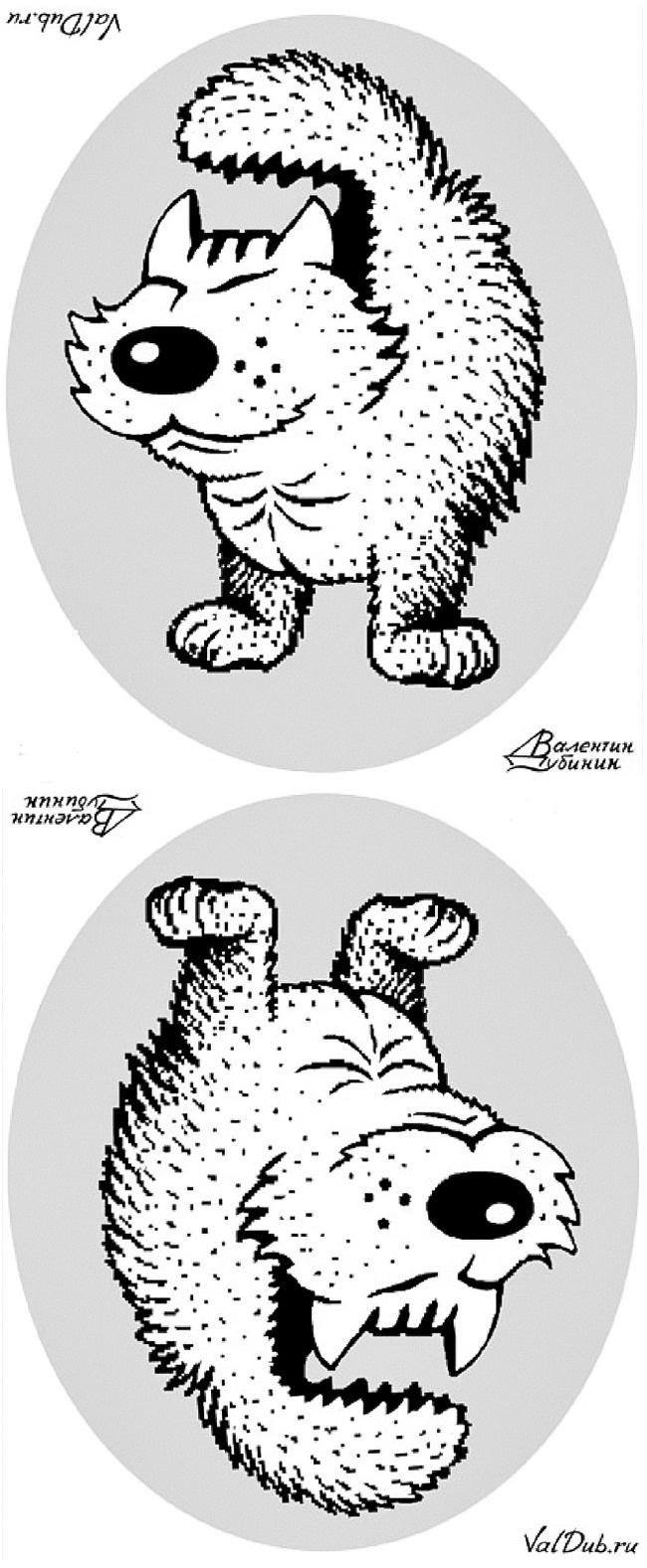 گربه و سگ