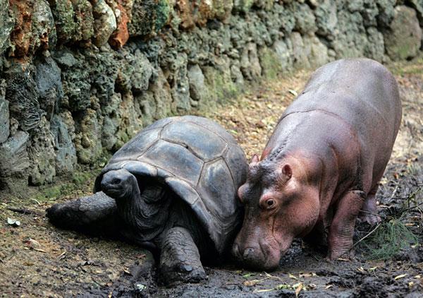 اسب آبی و لاکپشت