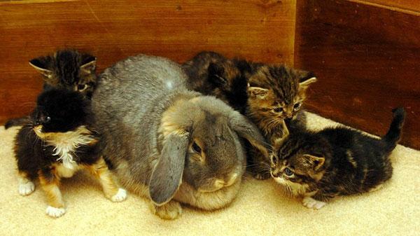 سامر خرگوش و بچه گربه ها