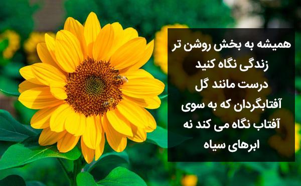 متن و جملات زیبا و عاشقانه در مورد گل آفتابگردان