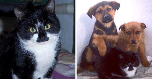 مارکی گربه و توله سگ