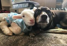 روبی سگ و گوسفند ادگار میشن