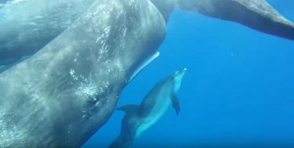 نهنگ های عنبر و دلفین