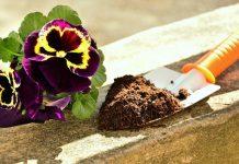 کاربرد قهوه در باغبانی