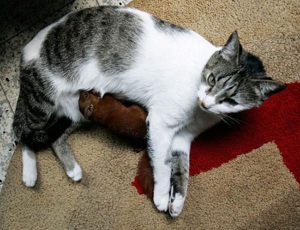 تیتا گربه و بچه سنجاب