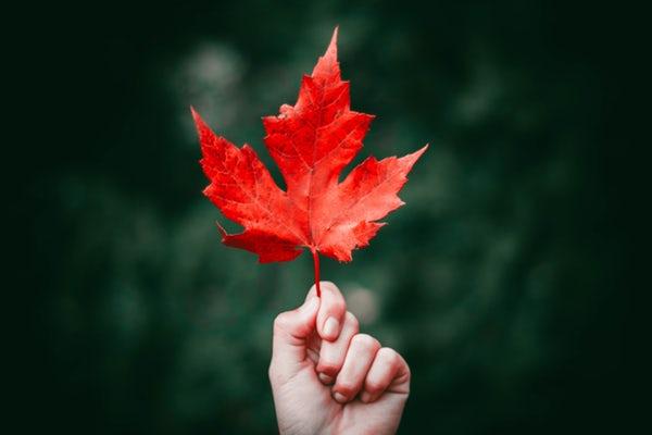 استاتوس پاییزی غمگین و دلتنگی