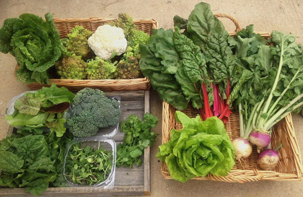 سبزیجات حاوی کلسیم