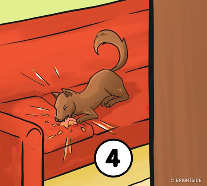سگ را از مبل جدا می کنید