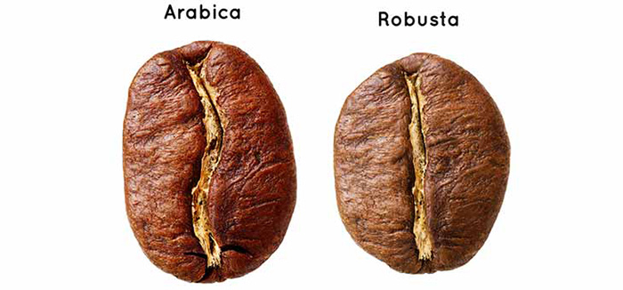 تفاوت های قهوه عربیکا با روبوستا