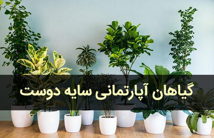 گل و گیاهان آپارتمانی سایه دوست و مقاوم به نور کم
