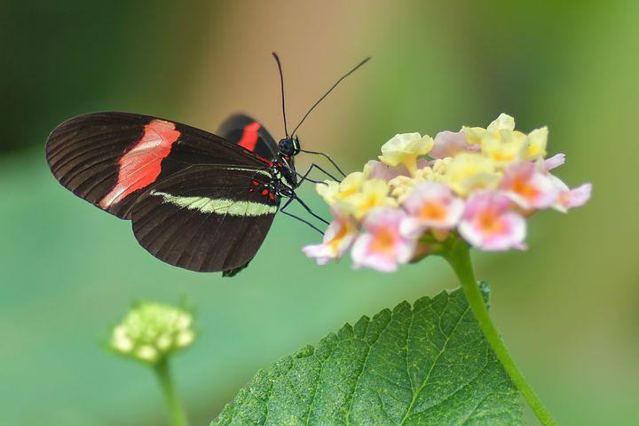 شعر عاشقانه درباره پروانه