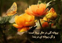 متن زیبا در مورد پروانه و گل