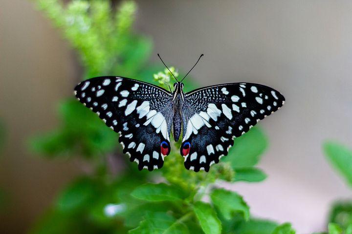 متن های کوتاه و ادبی زیباه درباره پروانه