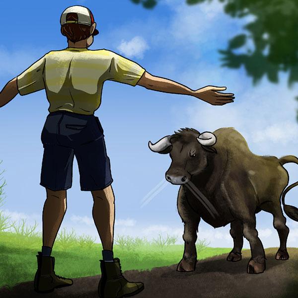 اگر یک گاو وحشی به شما حمله کرد چه می کنید؟