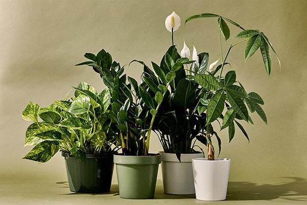 فواید و خواص گل و گیاهان برای منزل