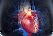 دانستنی های علمی و پزشکی درباره قلب انسان