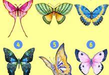 پروانه مورد علاقه شما کدام است؟
