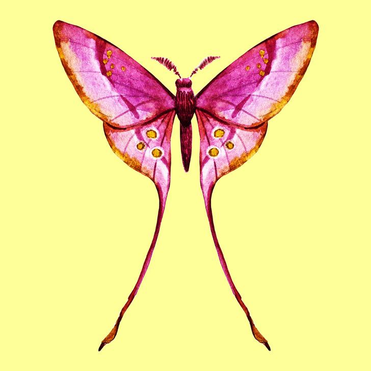 پروانه شمار 1