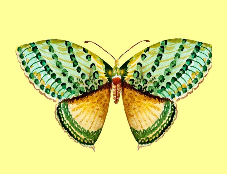 پروانه شماره 2