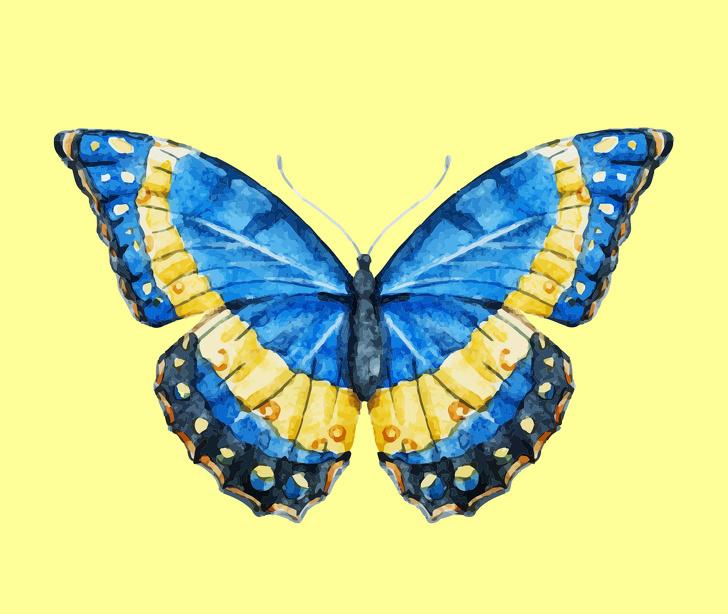 پروانه شماره 3