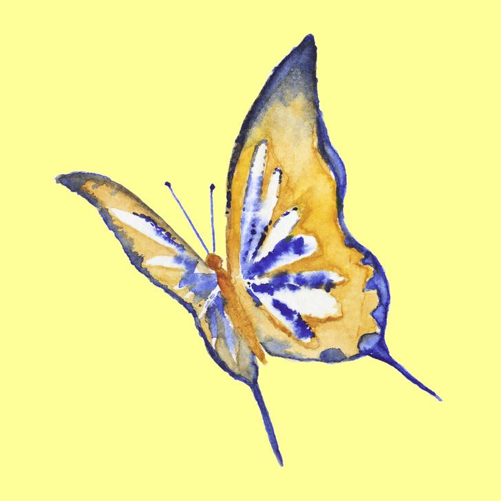 پروانه شماره 5