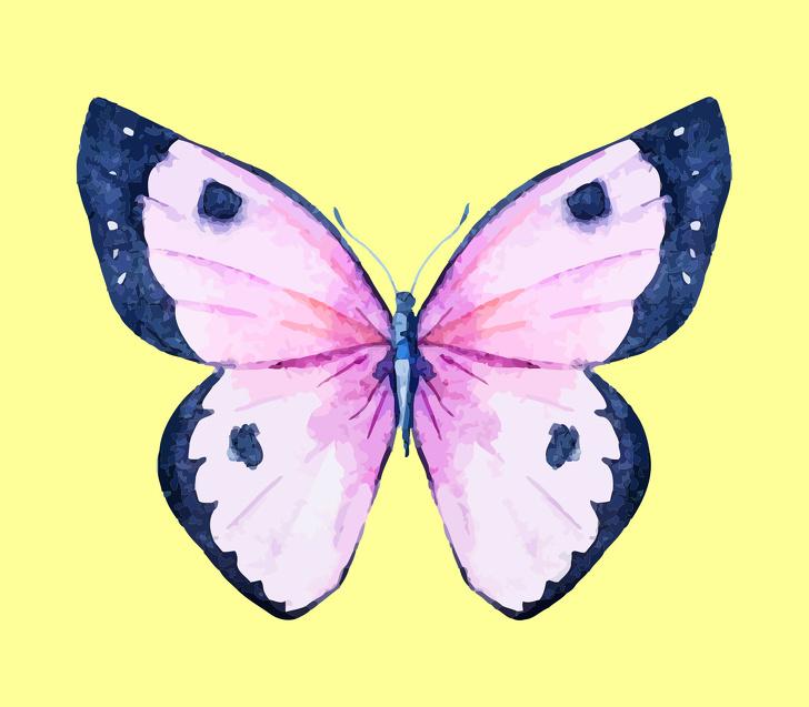 پروانه شماره 6