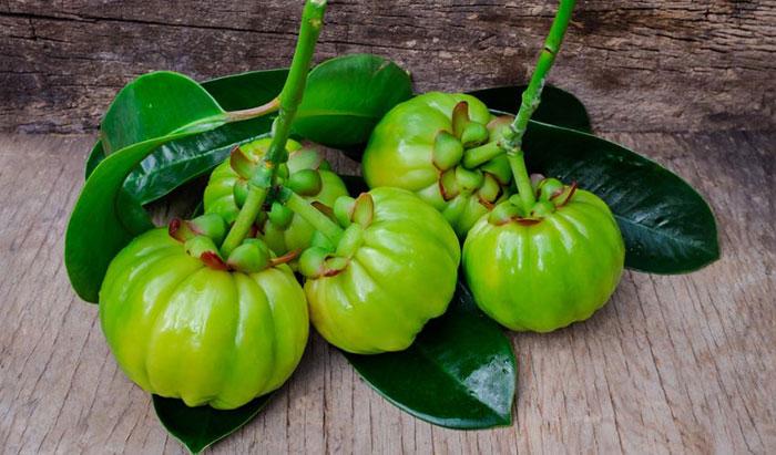خواص میوه گارسینیا کامبوجیا برای لاغری