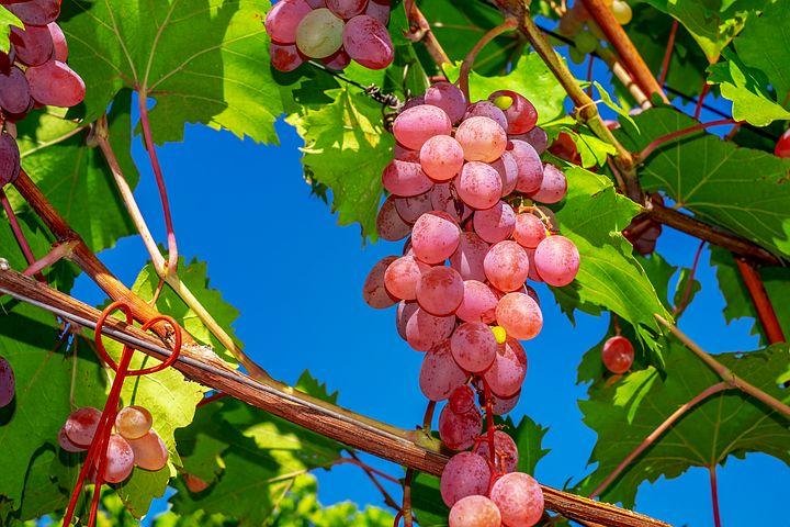 بهترین میوه های دنیا