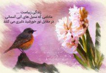 جملات زیبا و ادبی درباره گل سنبل