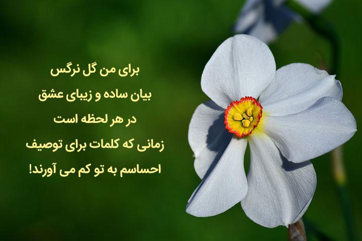 عکس نوشته گل نرگس برای پروفایل