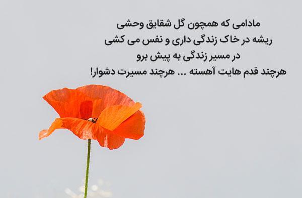 متن زیبا و ادبی راجب گل شقایق