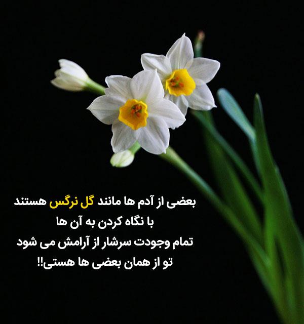 متن قشنگ راجب گل نرگس