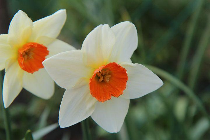 اس ام اس و پیامک زیبا و عاشقانه گل نرگس