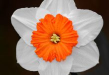 شعر گل نرگس جوونه زد میون باغ فاطمی