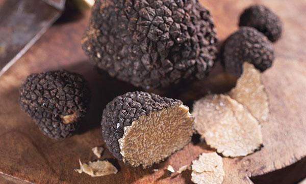 خواص قارچ دنبلان یا ترافل
