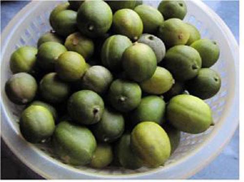 لیمو ترش های شیرازی را به مدت 1 روز در آب و نمک خیس کرده و آبکشی کنید