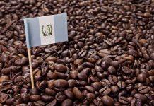 همه چیز درباره قهوه گواتمالا