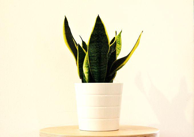 گیاهان مناسب برای اداره