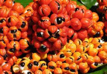 عکس میوه گوارانا